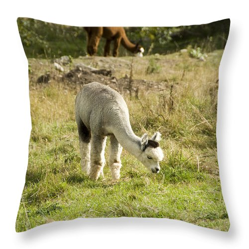 Two Throw Pillow featuring the photograph Cute by Milena Boeva