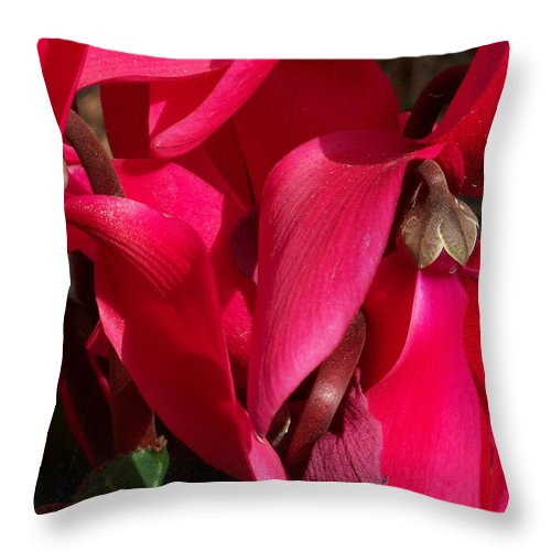 Flowers Throw Pillow featuring the photograph Cyclamen by Kathy McClure