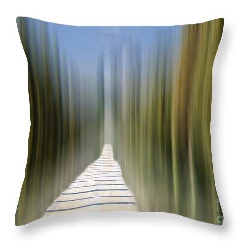 Cypress Alley Throw Pillow featuring the photograph Cypress Alley by Mats Silvan