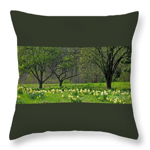 Spring Throw Pillow featuring the photograph Daffodil Meadow by Ann Horn