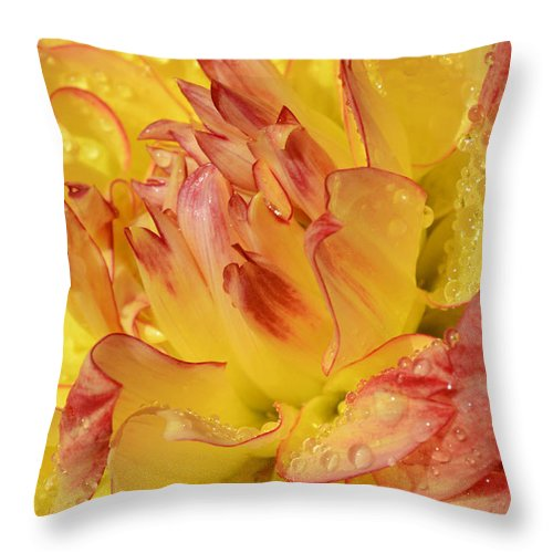Dahlia Throw Pillow featuring the photograph Dahlia - 812 by Paul W Faust - Impressions of Light