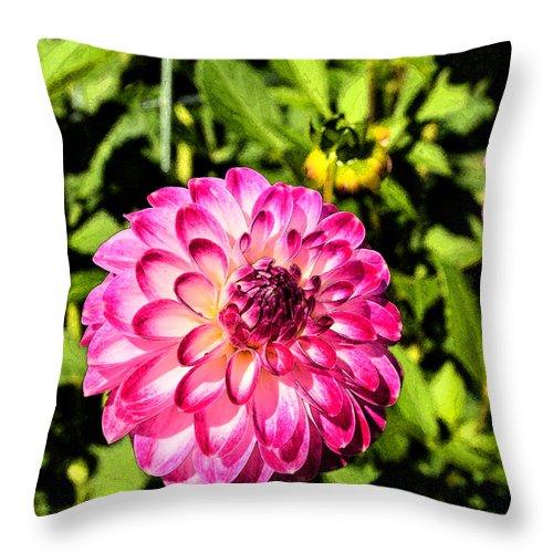Halifax Public Garden Throw Pillow featuring the digital art Dahlia 9 by Eva Kaufman