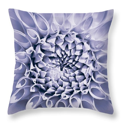 Dahlia Throw Pillow featuring the photograph Dahlia Flower Star Burst Purple by Jennie Marie Schell