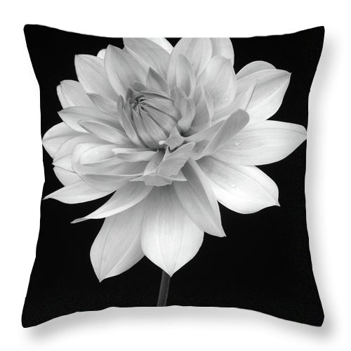 Haslemere Throw Pillow featuring the photograph Dahlia In Gentle Shades Of Grey by Rosemary Calvert
