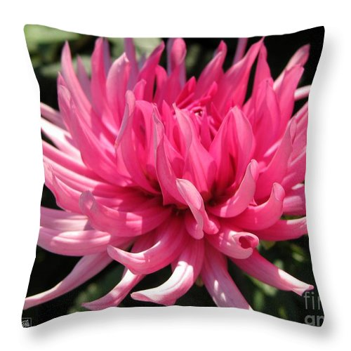 Mccombie Throw Pillow featuring the photograph Dahlia Named Pretty In Pink by J McCombie