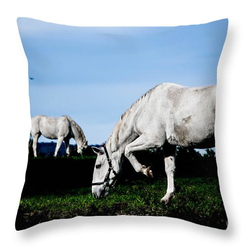 Horse Throw Pillow featuring the photograph Dainty by Carlee Ojeda