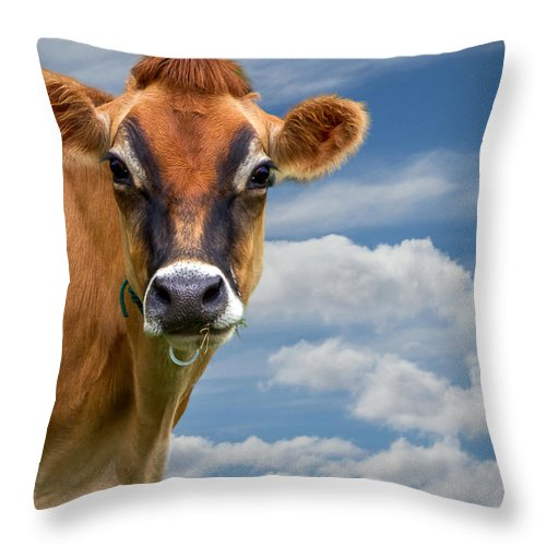 Cow Throw Pillow featuring the photograph Dairy Cow Bessy by Bob Orsillo