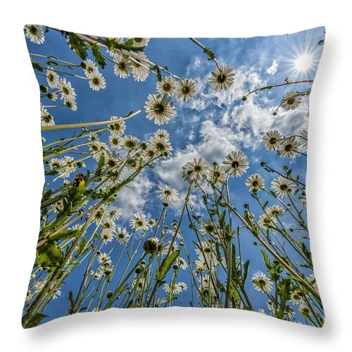 Daisies Throw Pillow featuring the photograph Daisies by Julian Eales