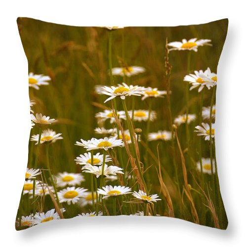 Daisies Throw Pillow featuring the photograph Daisies by Mel Hensley