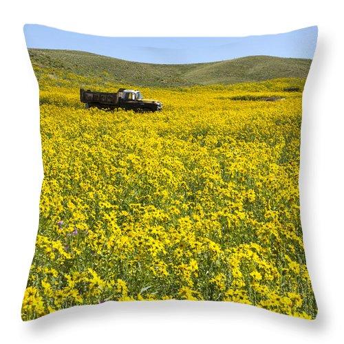 Colorado Photographs Throw Pillow featuring the photograph Daisy Daisy by Gary Benson
