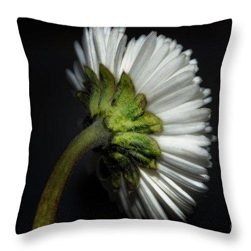 Flower Throw Pillow featuring the photograph Daisy Flower by Mats Silvan