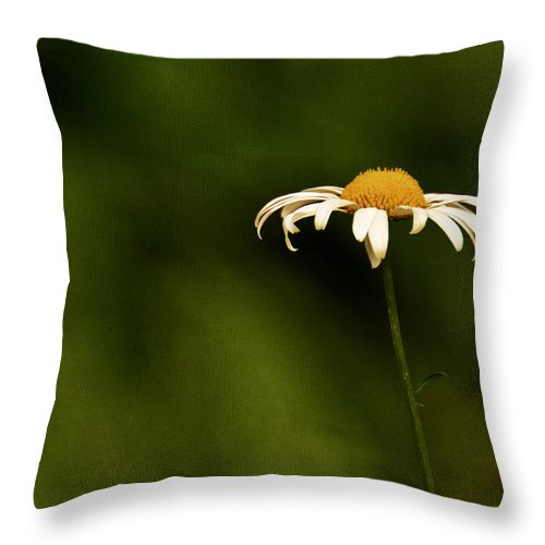 Daisies Throw Pillow featuring the photograph Daisy by Mel Hensley