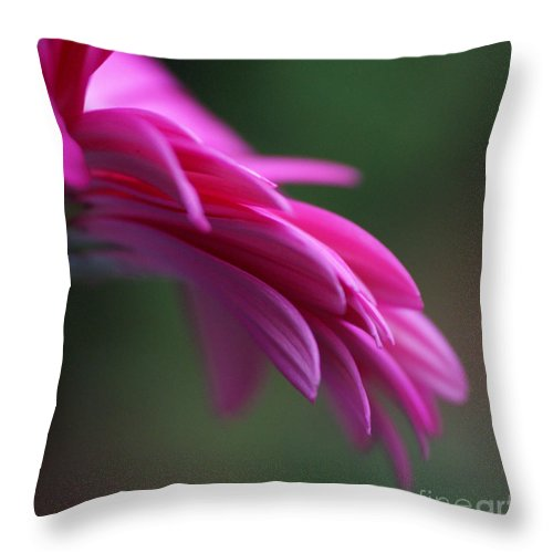Pink Throw Pillow featuring the photograph Daisy Petals by Carol Lynch