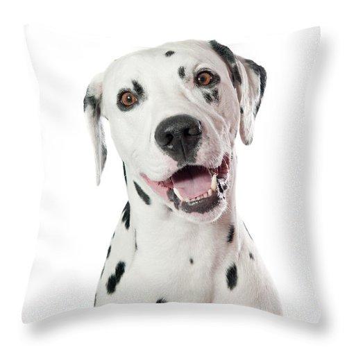Animal Throw Pillow featuring the photograph Dalmatian Dog by Viktor Pravdica