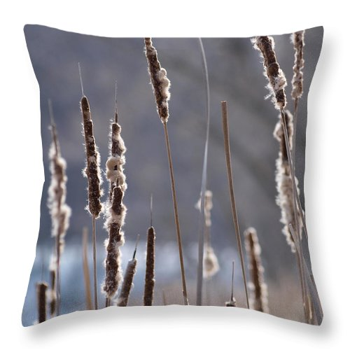 Throw Pillow featuring the photograph Dancing Cattails by Primal Traces