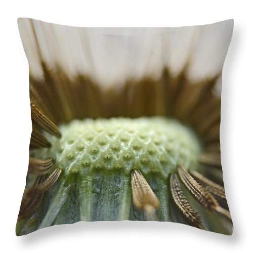 Nature Throw Pillow featuring the photograph Dandelion Seed Macro by Debbie Portwood