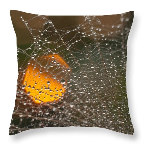 Close-up Throw Pillow featuring the photograph Dandelion With Droplets Close-up by Olga Tkachenko