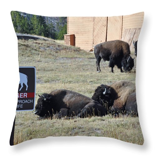 Yellowstone Throw Pillow featuring the photograph Danger Do Not Approach Wildlife by Bruce Gourley