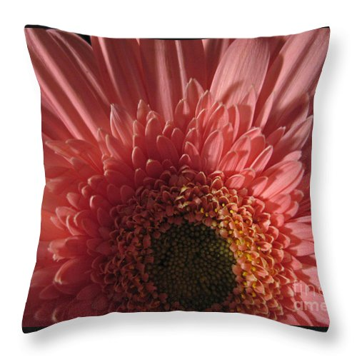 Flower Throw Pillow featuring the photograph Dark Radiance by Ann Horn