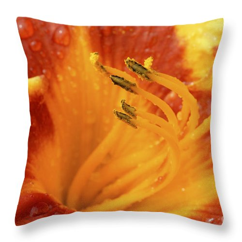Day Lily Throw Pillow featuring the photograph Day Lily In The Rain - 688 by Paul W Faust - Impressions of Light