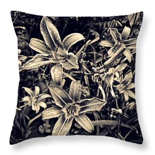 Day Lily Triptych Throw Pillow featuring the photograph Day Lily Triptych by Sarah Loft