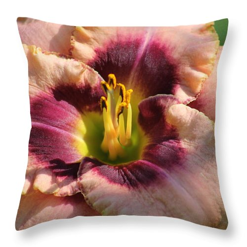 Daylilies Throw Pillow featuring the photograph Daylily Collection # 14 by G Berry
