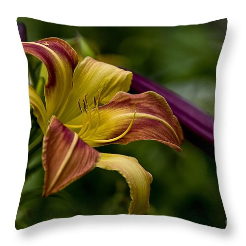 Daylily Throw Pillow featuring the photograph Daylily Picture 452 by World Wildlife Photography