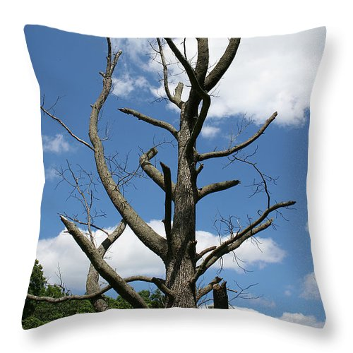 Dead Throw Pillow featuring the photograph Dead Tree by William Selander
