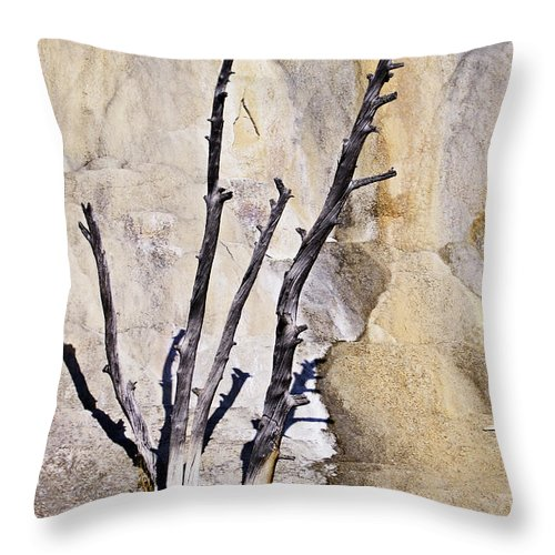 Yellowstone Throw Pillow featuring the photograph Dead Trees At Mammoth by Carolyn Fox