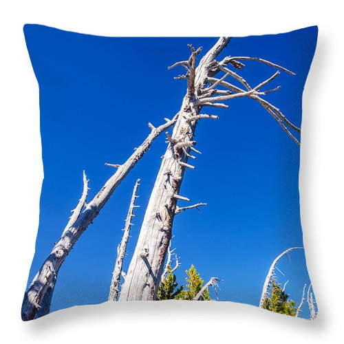 Beautiful Throw Pillow featuring the photograph Dead White Trees by Jess Kraft