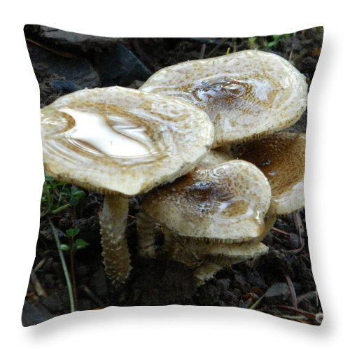 Deadly Beauty 1 Throw Pillow featuring the photograph Deadly Beauty 1 by Chalet Roome-Rigdon