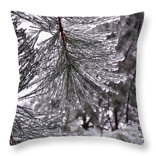 Pine Throw Pillow featuring the photograph December Freeze by Shana Rowe Jackson