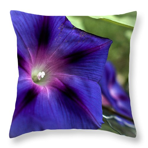 Throw Pillow featuring the photograph Deep Blue Morning Glories by Cheryl Baxter