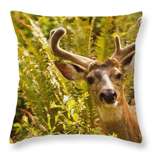 Deer Throw Pillow featuring the photograph Deer Buck In Velvet by Peggy Collins