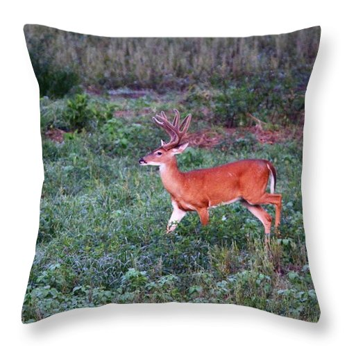 Deer Throw Pillow featuring the photograph Deer-img-0113-001 by Travis Truelove