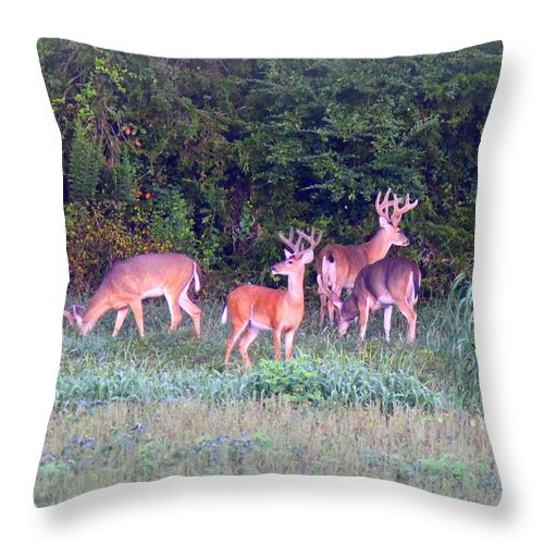 Deer Throw Pillow featuring the photograph Deer-img-0160-005 by Travis Truelove
