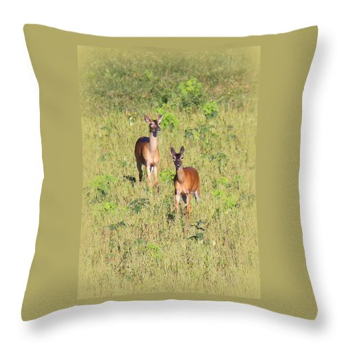 Deer Throw Pillow featuring the photograph Deer-img-0283-001 by Travis Truelove