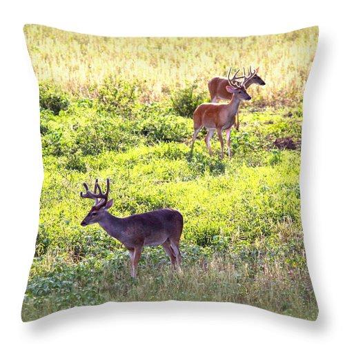 Deer Throw Pillow featuring the photograph Deer - 0437-004 by Travis Truelove