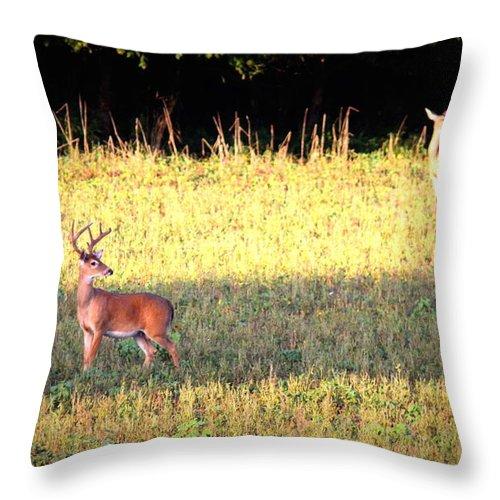 Deer Throw Pillow featuring the photograph Deer-img-0627-001 by Travis Truelove