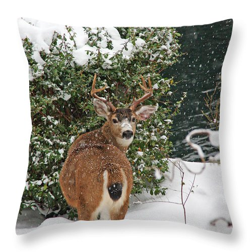 Deer Throw Pillow featuring the photograph Deer In Falling Snow by Peggy Collins