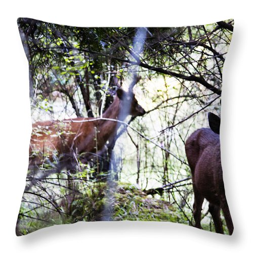 Deers Throw Pillow featuring the photograph Deer Looking For Food by Edward Hawkins II