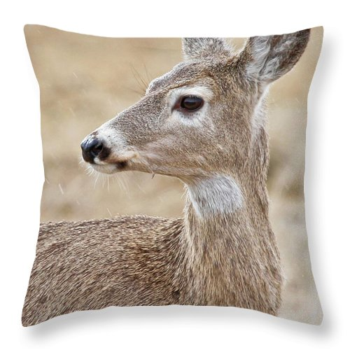 Deer Throw Pillow featuring the photograph White Tail Deer Profile by Athena Mckinzie