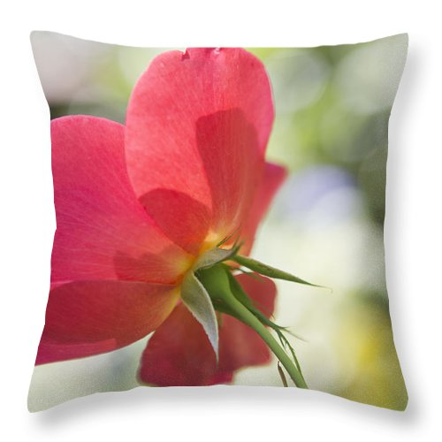 Rose Throw Pillow featuring the photograph Delicacy by Belinda Greb