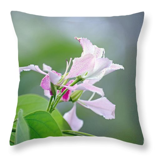 Flowers Throw Pillow featuring the photograph Delicate Delight by Kerryn Madsen-Pietsch
