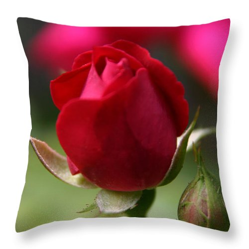 Rose Throw Pillow featuring the photograph Delicate Opening by Denyse Duhaime
