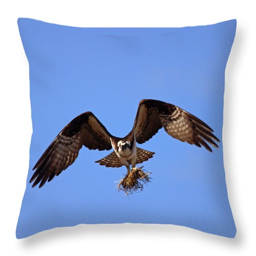 Osprey Throw Pillow featuring the photograph Delivery By Air by Mike Dawson