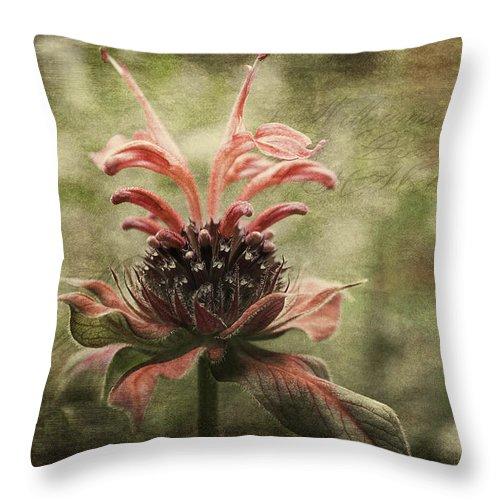 Beebalm Throw Pillow featuring the photograph Desert Longing by Jean OKeeffe Macro Abundance Art