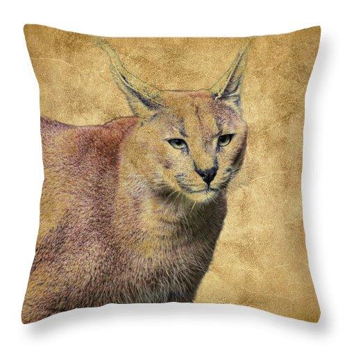 Caracal Throw Pillow featuring the photograph Desert Lynx by Steve McKinzie