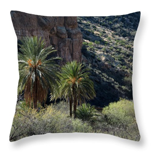 Boyce Thompson Arboretum Throw Pillow featuring the photograph Desert Palms by Laurel Powell