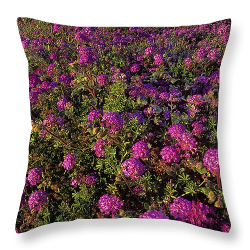 Desert Sand Verbena Throw Pillow featuring the photograph Desert Sand Verbena Wildflowers by Dave Welling